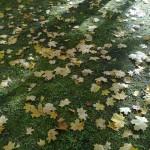 Herbstlaub im schwindenden Licht