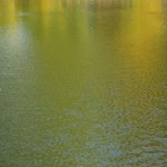 Goldene Flut